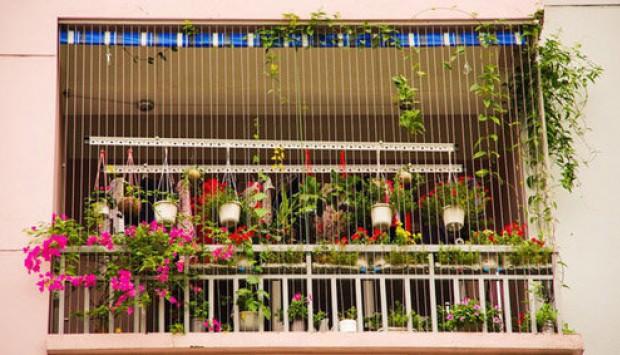 Biến ban công thành khu vườn hoa đẹp hút mắt